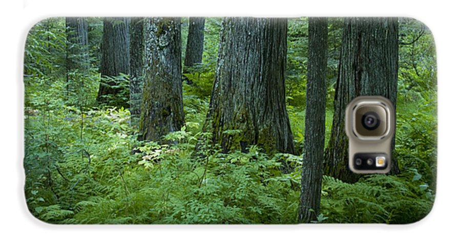Grove Galaxy S6 Case featuring the photograph Cedar Grove by Idaho Scenic Images Linda Lantzy