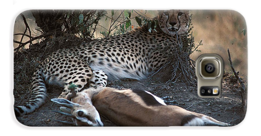 Spots Galaxy S6 Case featuring the photograph Cheetah With Kill by Carl Purcell