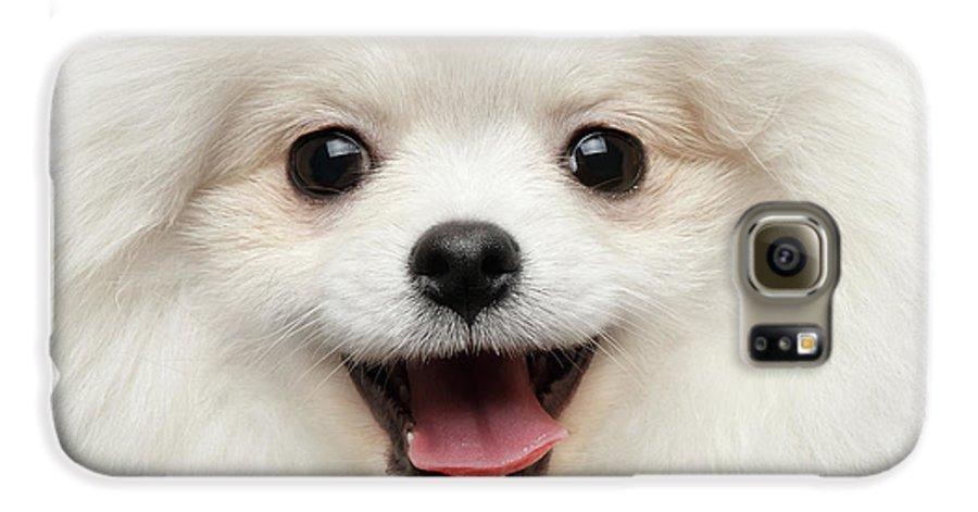 Closeup Galaxy S6 Case featuring the photograph Closeup Furry Happiness White Pomeranian Spitz Dog Curious Smiling by Sergey Taran