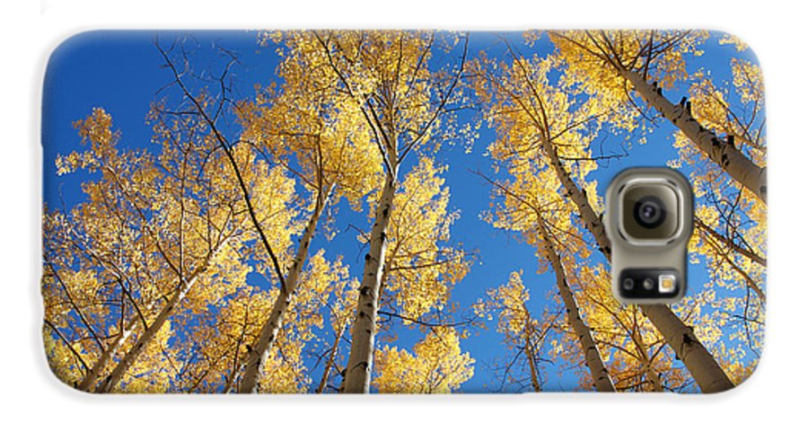 Aspen Galaxy S6 Case featuring the photograph Colorado Aspen by Jerry McElroy