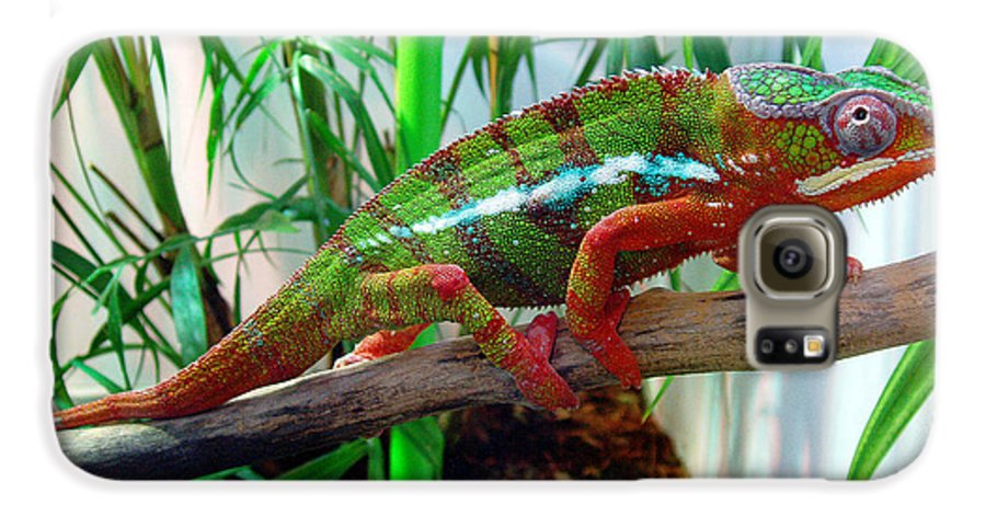Chameleon Galaxy S6 Case featuring the photograph Colorful Chameleon by Nancy Mueller