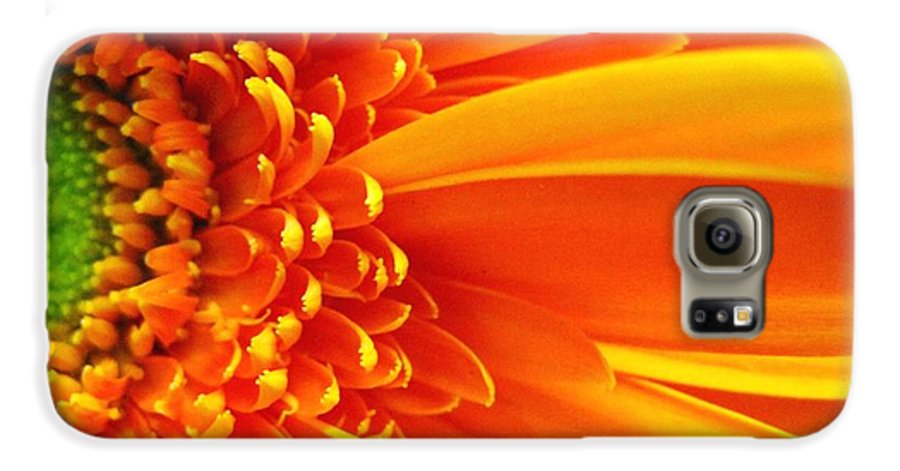 Red Galaxy S6 Case featuring the photograph Colors Galore by Rhonda Barrett
