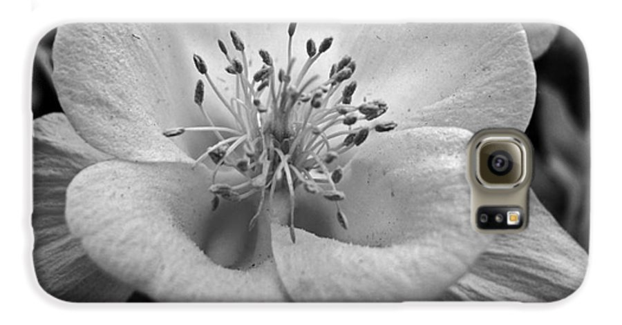 Flowers Galaxy S6 Case featuring the photograph Columbine by Amanda Barcon