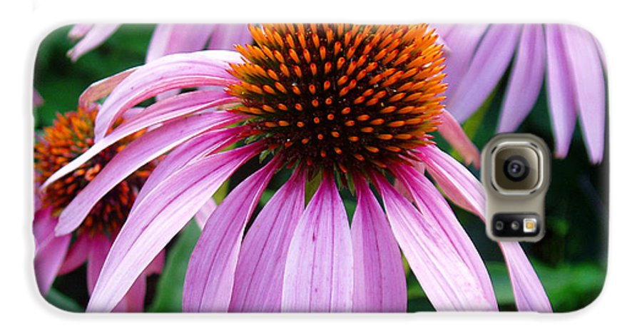 Coneflowers Galaxy S6 Case featuring the photograph Three Coneflowers by Nancy Mueller