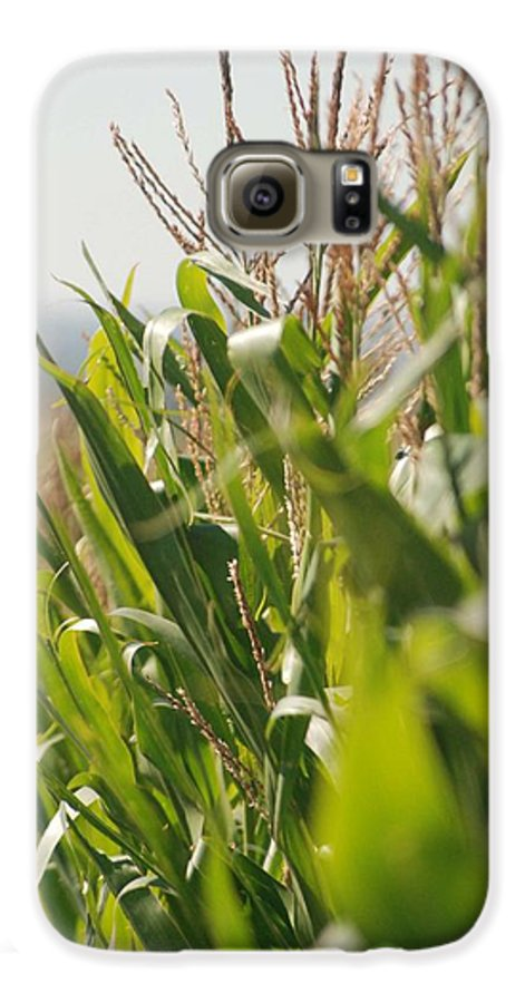 Corn Galaxy S6 Case featuring the photograph Corn Country by Margaret Fortunato