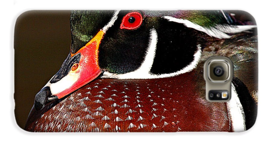 Duck Galaxy S6 Case featuring the photograph Courtship Colors Of A Wood Duck Drake by Max Allen
