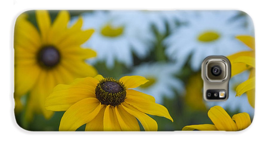Daisy Galaxy S6 Case featuring the photograph Daisies by Idaho Scenic Images Linda Lantzy