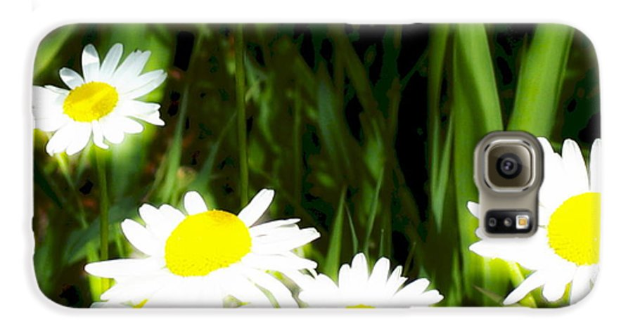 Daisies Galaxy S6 Case featuring the photograph Daisy Dream by Idaho Scenic Images Linda Lantzy