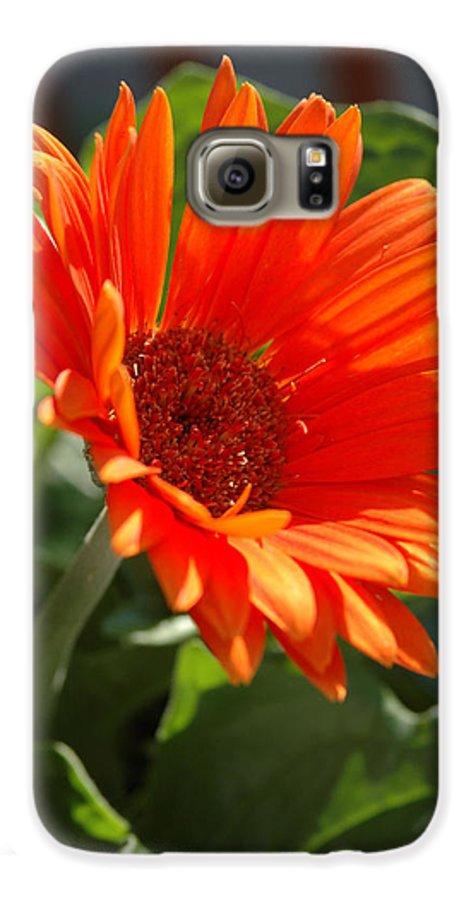 Daisy Galaxy S6 Case featuring the photograph Daisy by Kathy Schumann