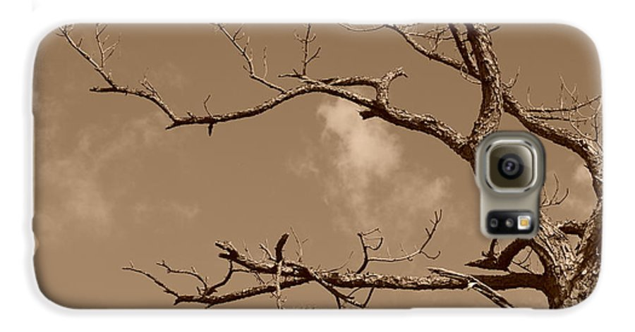 Sepia Galaxy S6 Case featuring the photograph Dead Wood by Rob Hans