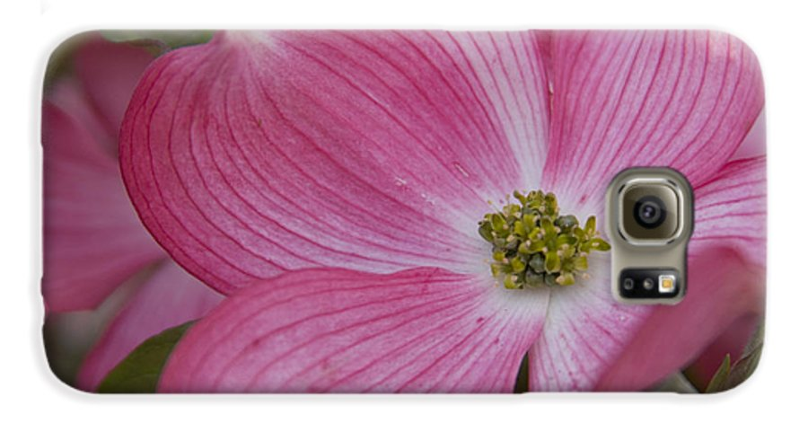 Dogwood Galaxy S6 Case featuring the photograph Dogwood Bloom by Idaho Scenic Images Linda Lantzy
