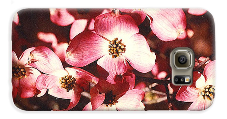 Dogwood Galaxy S6 Case featuring the photograph Dogwood Harmony by Nancy Mueller
