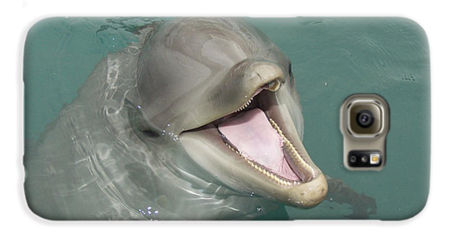 Dolphin Galaxy S6 Case featuring the painting Dolphin by Sean M