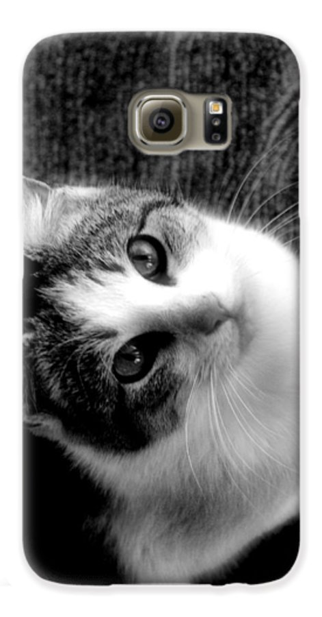 Cat Galaxy S6 Case featuring the photograph Don't Ever Leave by Gaby Swanson
