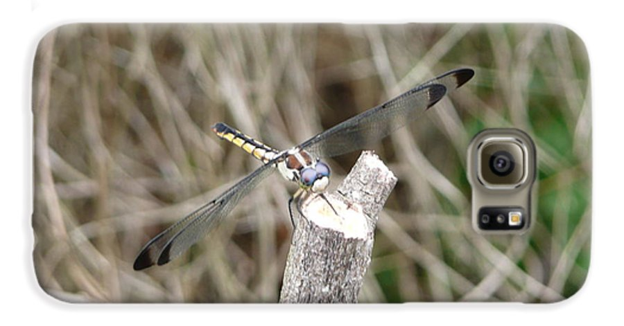 Wildlife Galaxy S6 Case featuring the photograph Dragonfly I by Kathy Schumann