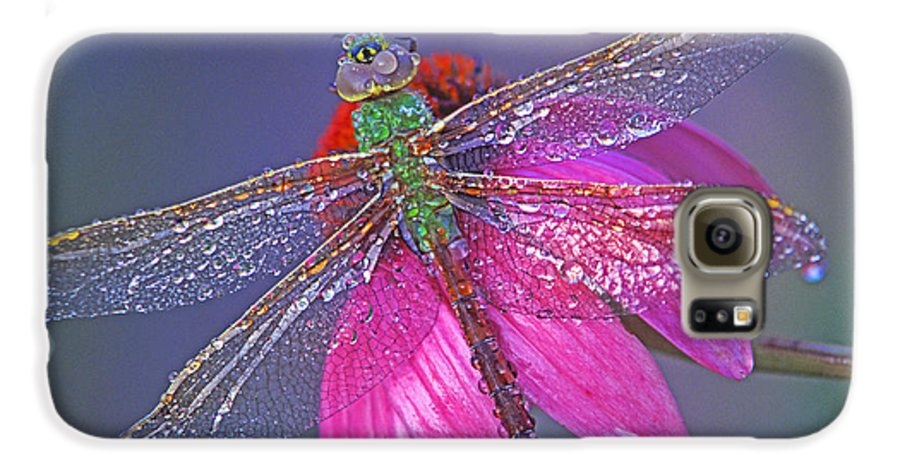 Dew Covered Dragonfly Rests On Purple Cone Flower Galaxy S6 Case featuring the photograph Dreaming Dragon by Bill Morgenstern