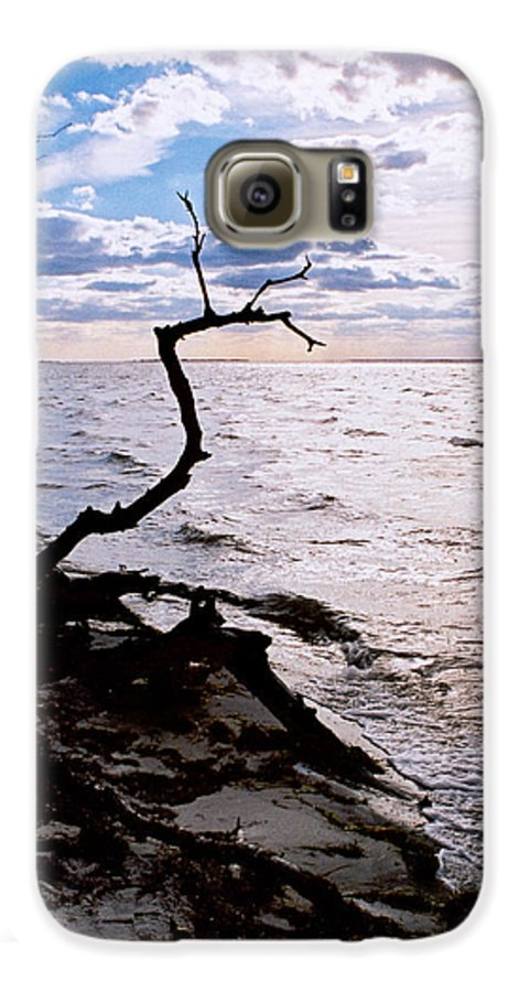 Barnegat Galaxy S6 Case featuring the photograph Driftwood Dragon-barnegat Bay by Steve Karol
