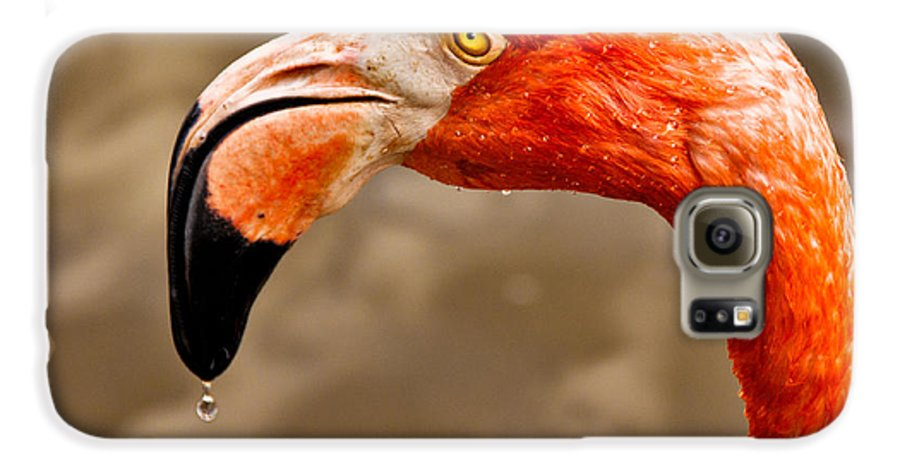Flamingo Galaxy S6 Case featuring the photograph Dripping Flamingo by Christopher Holmes