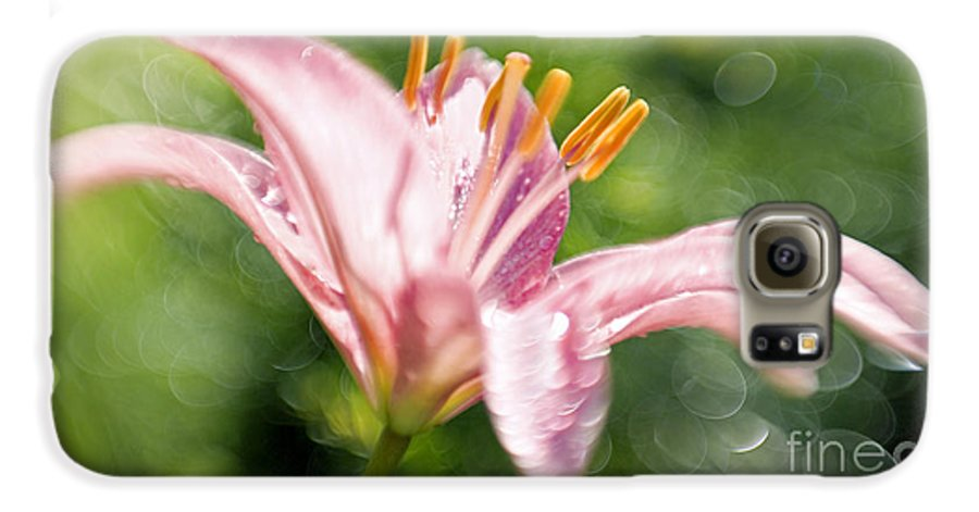 Easter Lily Lilium Lily Flowers Flower Floral Bloom Blossom Blooming Garden Nature Plant Petals Plants Grow Species Garden One Single 1 Petals Close-up Close Up Cultivate Botanical Botany Nature Galaxy S6 Case featuring the photograph Easter Lily 1 by Tony Cordoza