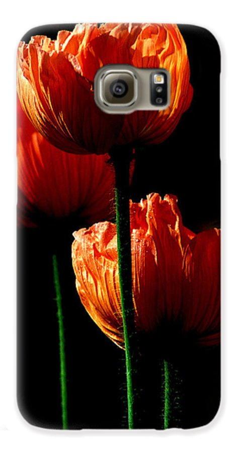 Photograph Galaxy S6 Case featuring the photograph Elegance by Stephie Butler