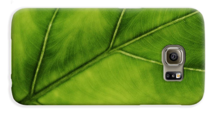 Leaf Galaxy S6 Case featuring the photograph Elephant Ear by Marilyn Hunt