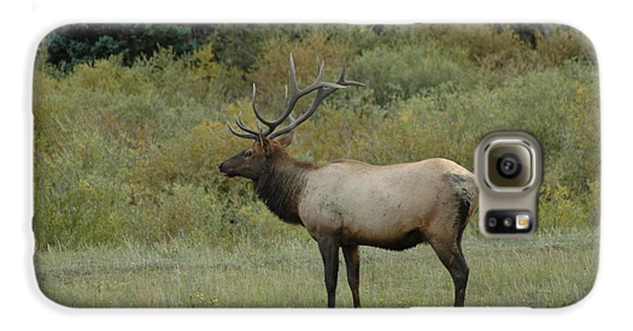 Elk Galaxy S6 Case featuring the photograph Elk by Kathy Schumann