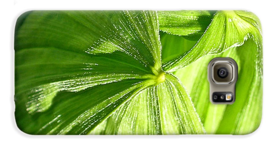 Plant Galaxy S6 Case featuring the photograph Emerging Plants by Douglas Barnett