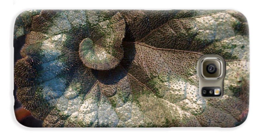 Escargot Galaxy S6 Case featuring the photograph Escargot Begonia by Anna Lisa Yoder
