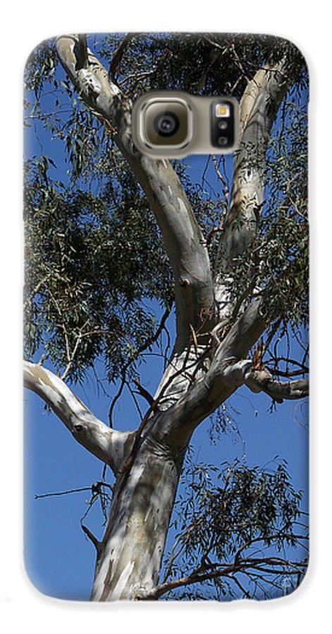 Trees Galaxy S6 Case featuring the photograph Eucalyptus by Kathy McClure