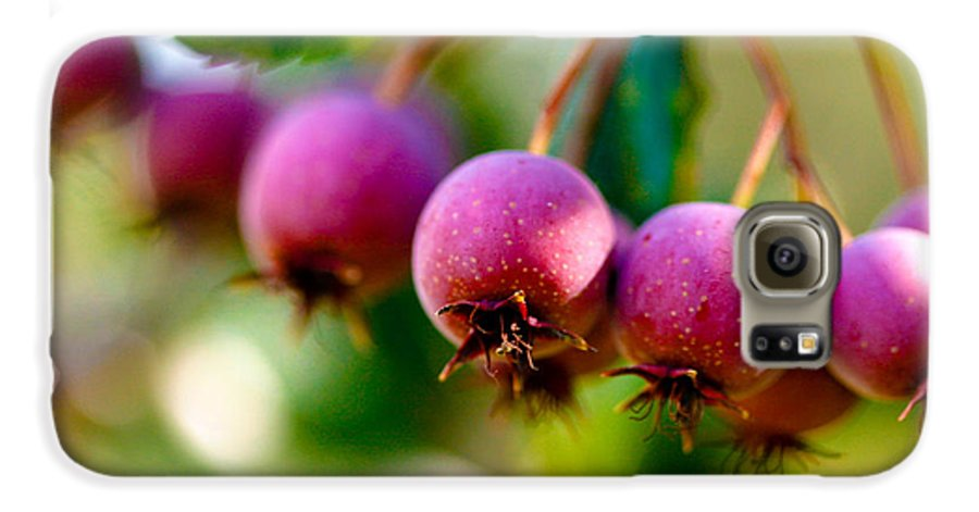 Berry Galaxy S6 Case featuring the photograph Fall Berries by Marilyn Hunt
