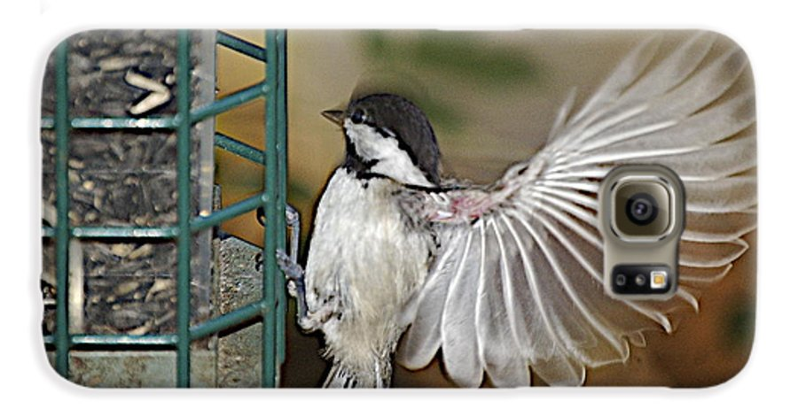 Chickadee In Flight Galaxy S6 Case featuring the photograph Fan Dance by Faith Harron Boudreau
