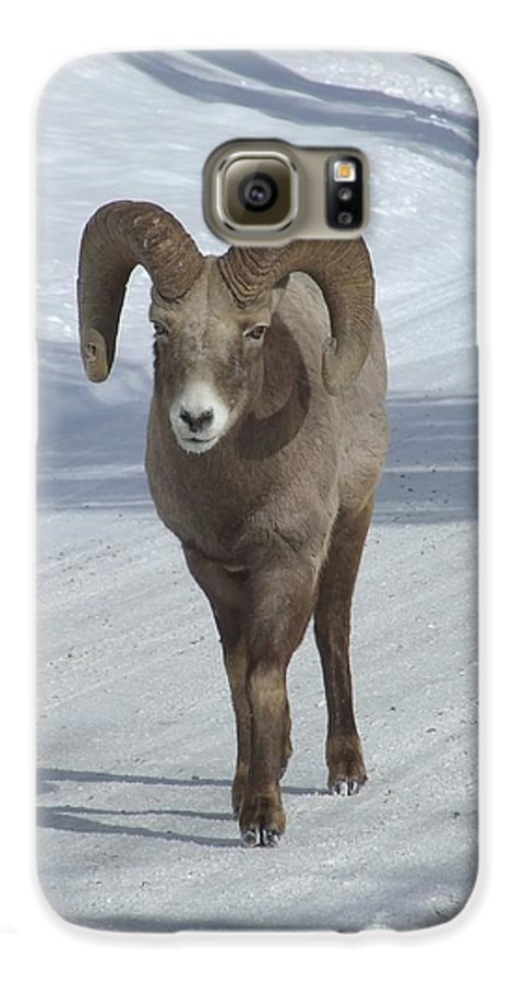 Bighorn Sheep Galaxy S6 Case featuring the photograph Farewell To The King by Tiffany Vest