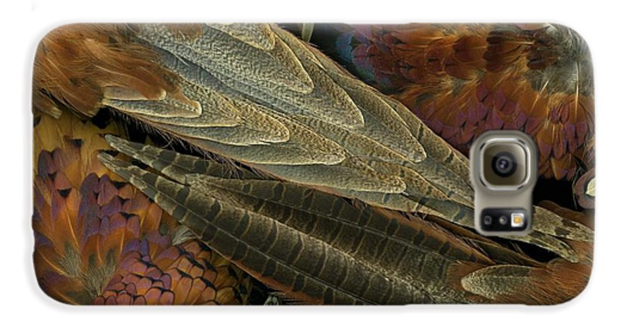 Pheasant Galaxy S6 Case featuring the photograph Featherdance by Christian Slanec