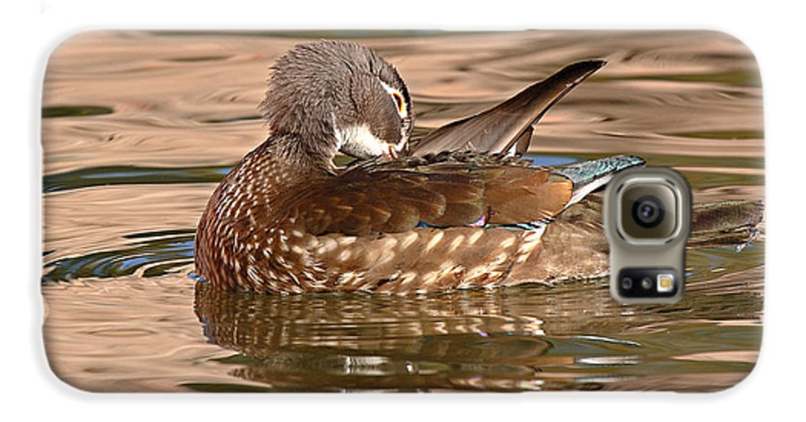 Wood Duck Galaxy S6 Case featuring the photograph Female Wood Duck Preening On The Water by Max Allen