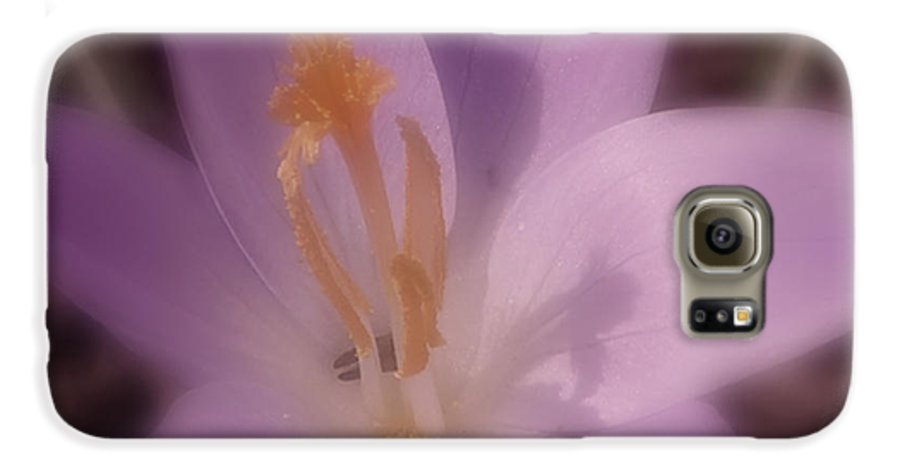 Crocus Galaxy S6 Case featuring the photograph First Flower Of Spring by Kenneth Krolikowski