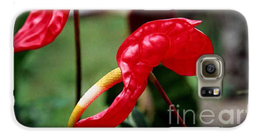 Exotic Flowers Galaxy S6 Case featuring the photograph Flamingo Flower by Kathy McClure