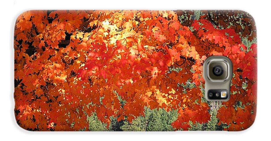 Autumn Photographs Galaxy S6 Case featuring the photograph Flickering Sunlight by Louise Magno