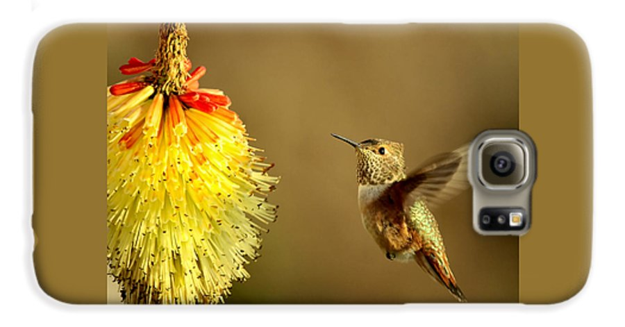 Hummingbird Galaxy S6 Case featuring the photograph Flight Of The Hummer by Mike Dawson