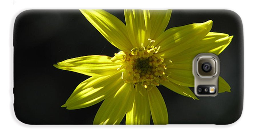 Light Galaxy S6 Case featuring the photograph Floral by Amanda Barcon