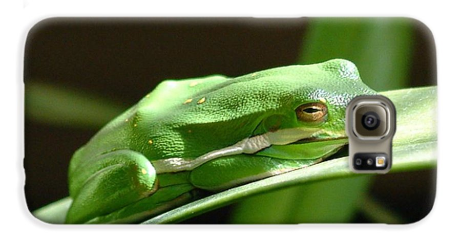 Frog Galaxy S6 Case featuring the photograph Florida Tree Frog by Ned Stacey