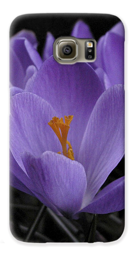Flowers Galaxy S6 Case featuring the photograph Flower Crocus by Nancy Griswold