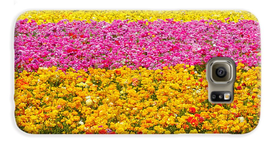Flower Galaxy S6 Case featuring the photograph Flower Fields Carlsbad Ca Giant Ranunculus by Christine Till