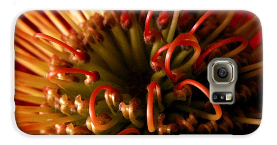 Flowers Galaxy S6 Case featuring the photograph Flower Hawaiian Protea by Nancy Griswold