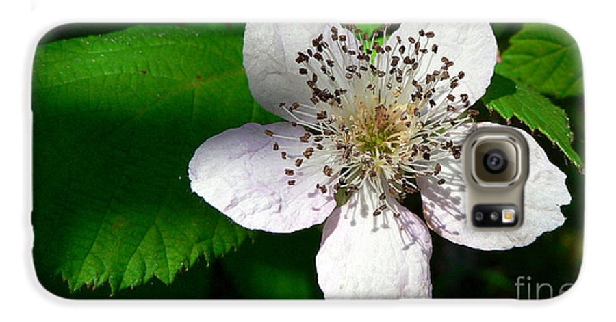 Flower Galaxy S6 Case featuring the photograph Flower In Shadow by Larry Keahey
