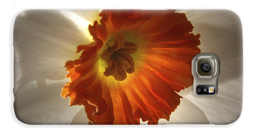 Flowers Galaxy S6 Case featuring the photograph Flower Narcissus by Nancy Griswold