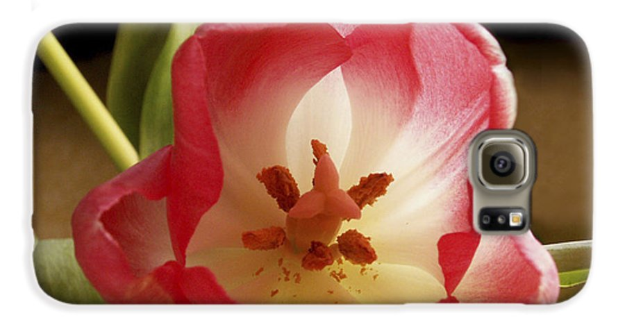 Flowers Galaxy S6 Case featuring the photograph Flower Tulip by Nancy Griswold