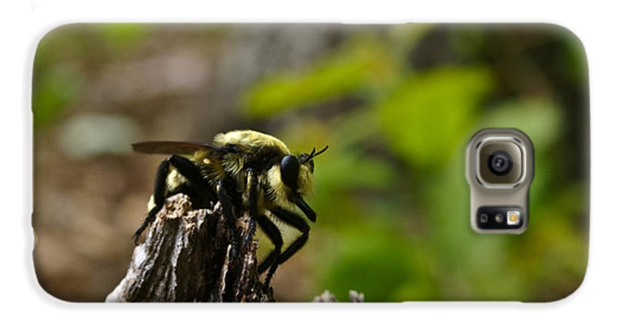 Fly Galaxy S6 Case featuring the photograph Fly On Mountain by Douglas Barnett