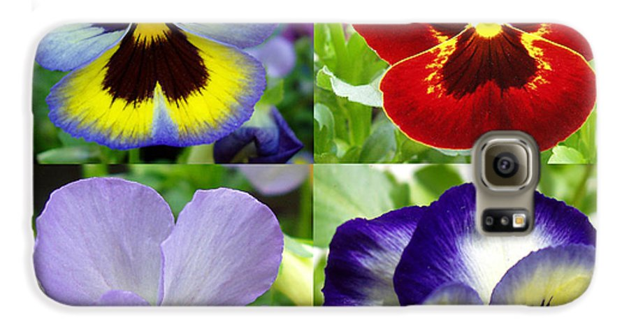 Pansy Galaxy S6 Case featuring the photograph Four Pansies by Nancy Mueller