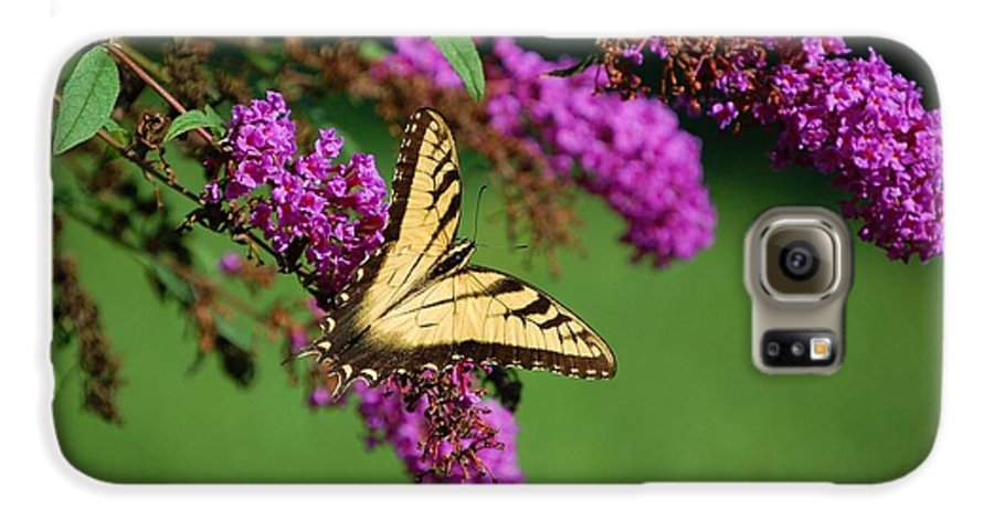 Butterfly Galaxy S6 Case featuring the photograph Freedom by Debbi Granruth