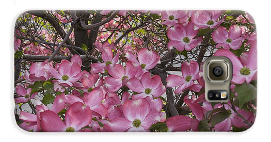 Dogwood Galaxy S6 Case featuring the photograph Full Bloom by Idaho Scenic Images Linda Lantzy